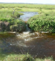 comunicado de prensa desastre ambiental de Paz de Ariporo-12